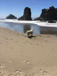 Frenk's first trip to the ocean