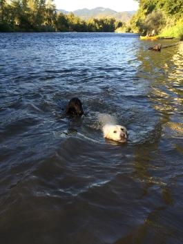 Sadie and Bella swimming