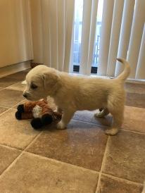 Blue boy 5.4 weeks