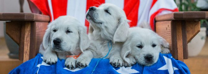 cropped-pups-in-chair-together-12.jpg
