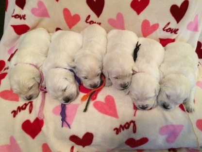 Female pups 18 days old