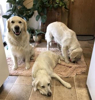 Frenk, Sadie and Leah (1)