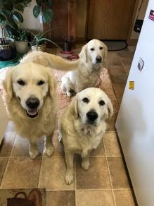 Frenk, Sadie and Leah (2)