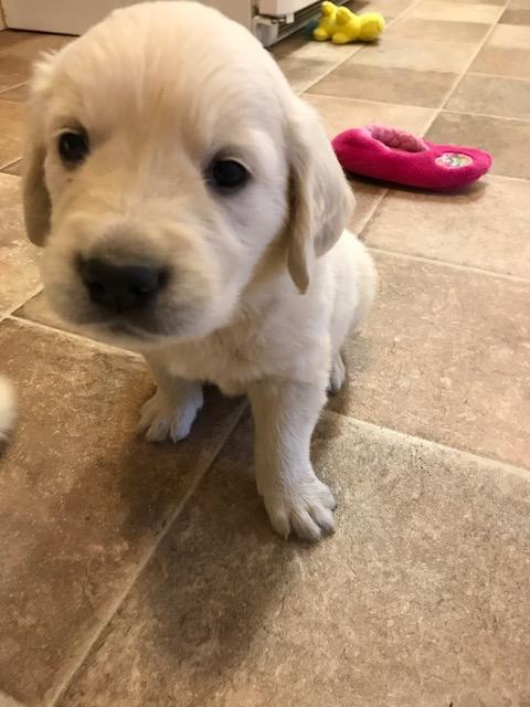 Green boy 5.4 weeks