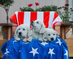pups-in-chair-together-1