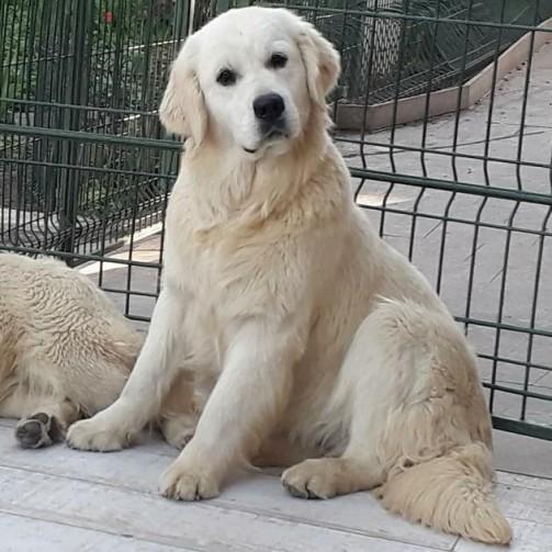Nocha at 12 months