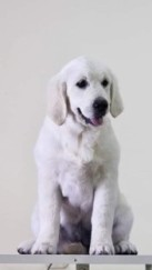 Greta at 4 months
