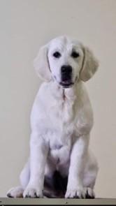 Tess at 4 months